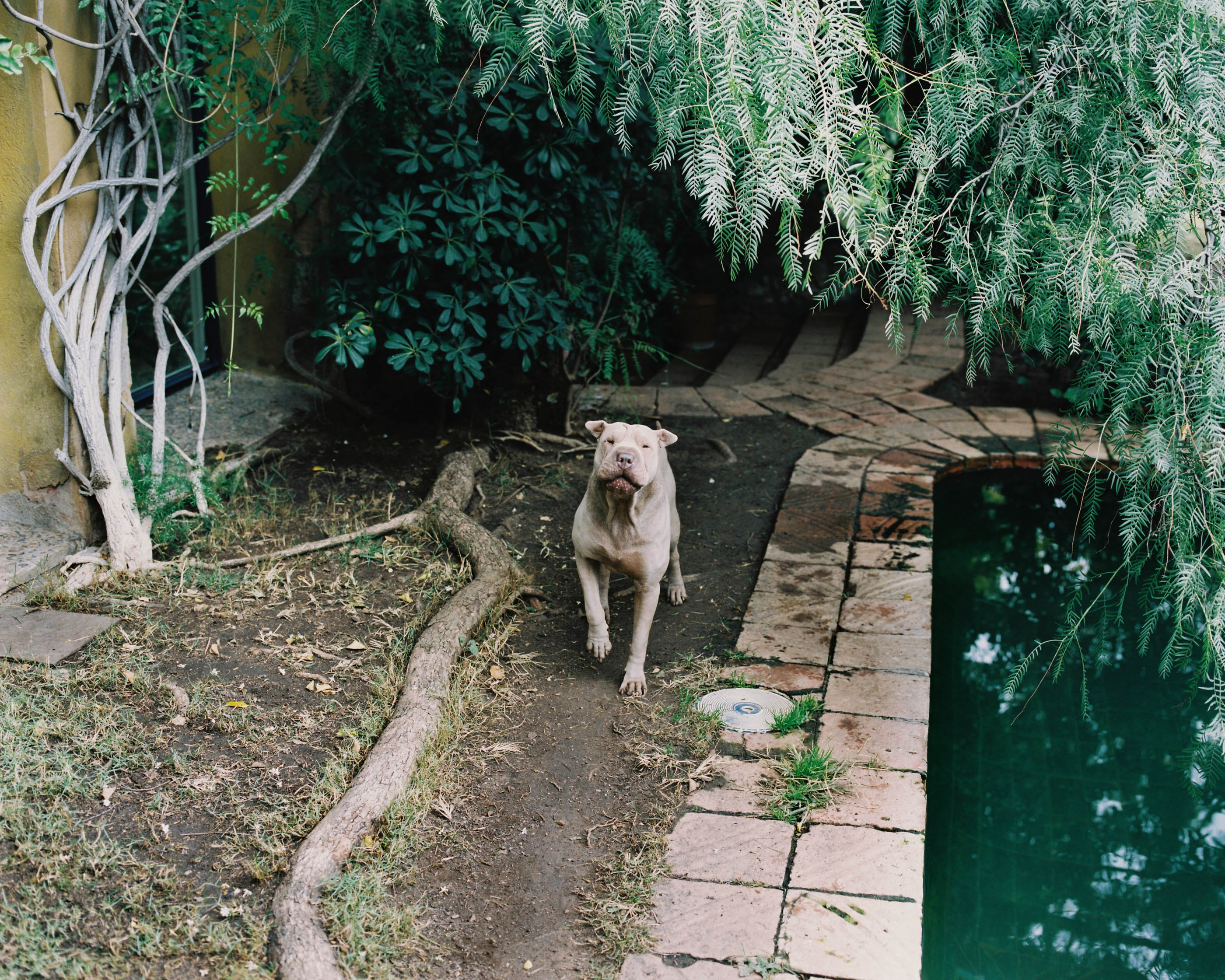 #editorial #xavier #corbero #wallstreetjournal #animals
