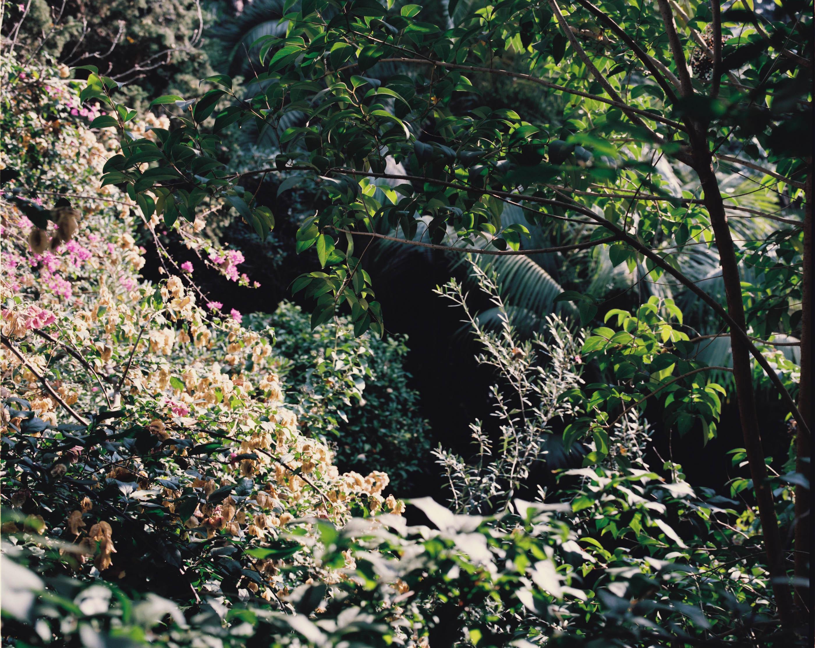 #editorial #xavier #corbero #vegetal #wallstreetjournal