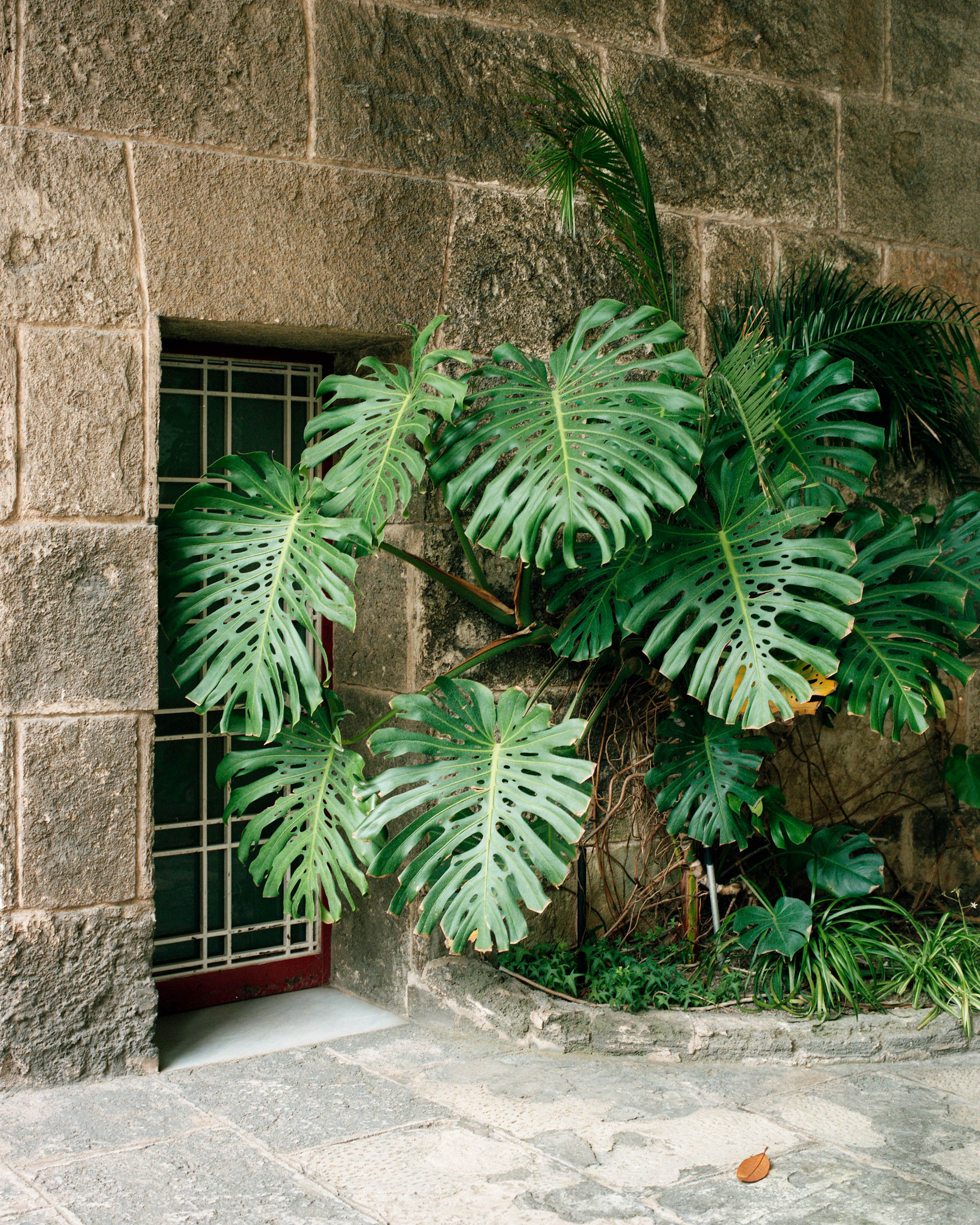 #barcelona #monocle #sarria #lobby #editorial #vegetal #vegetal #monstera