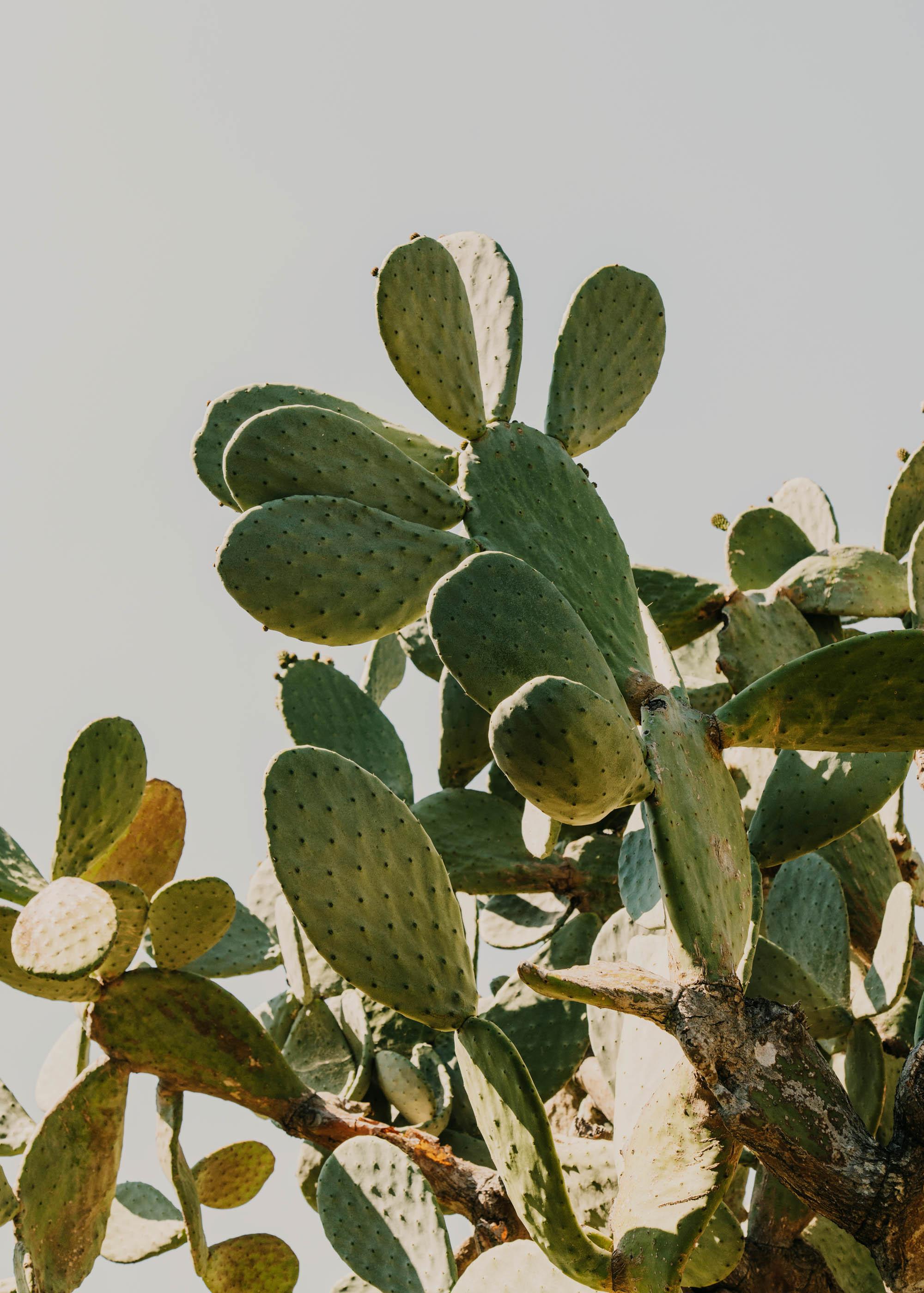 #editorial #italy #puglia #masseria #morosseta #plants #openhouse #cactus