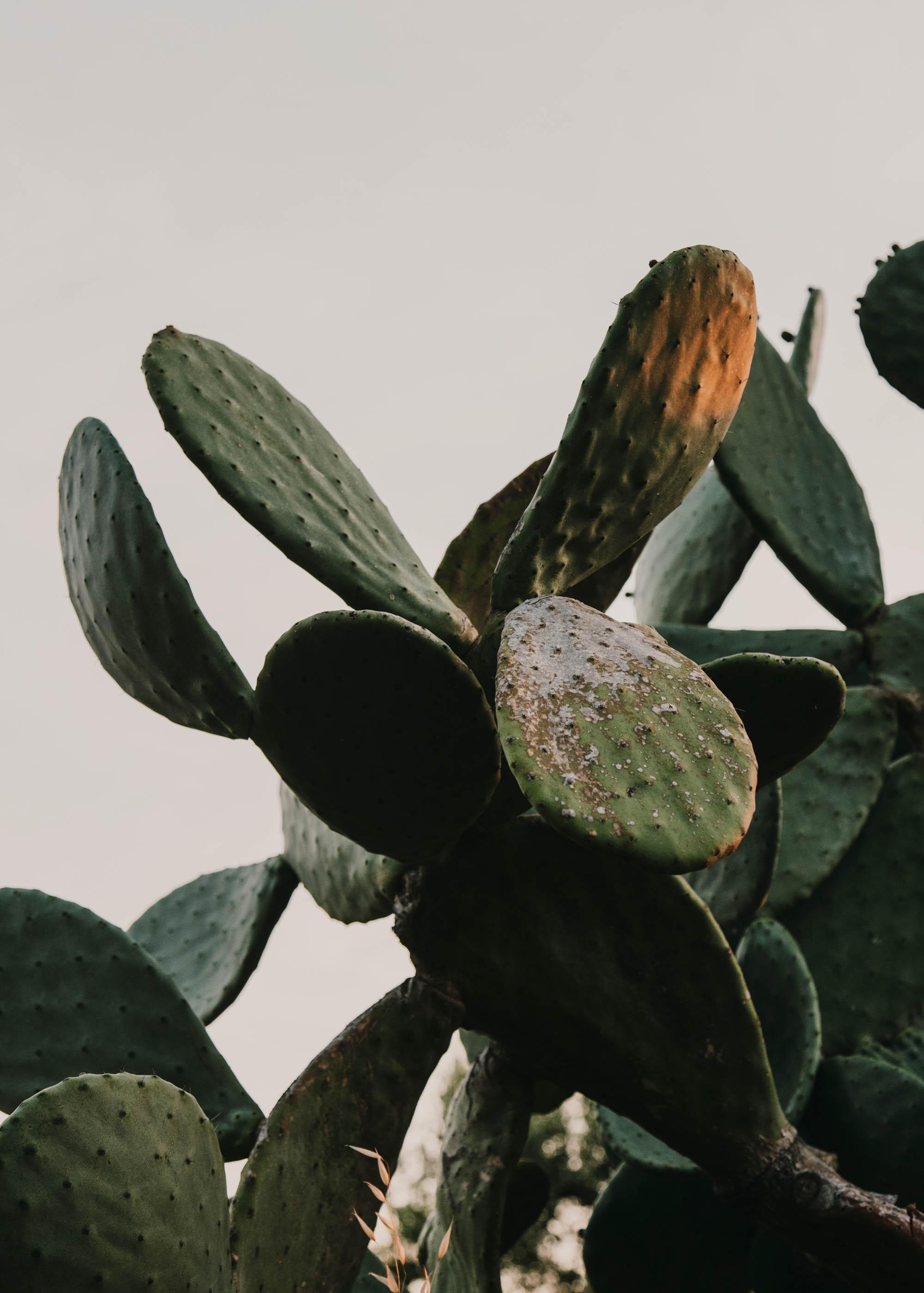 #editorial #italy #puglia #masseria #morosseta #openhouse #plants #cactus