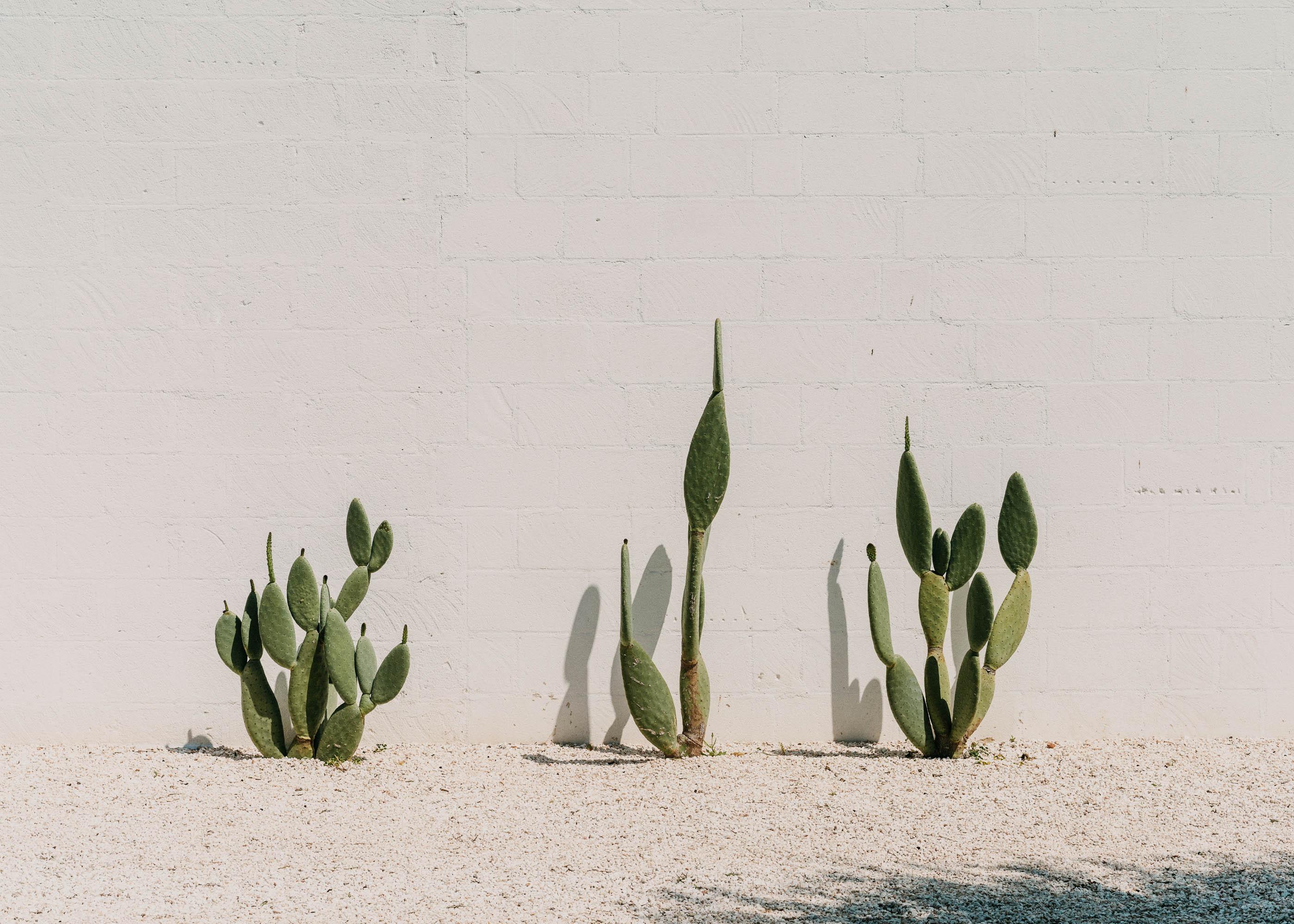 #italy #puglia #masseria #morosseta #openhouse #plants #vegetal #cactus