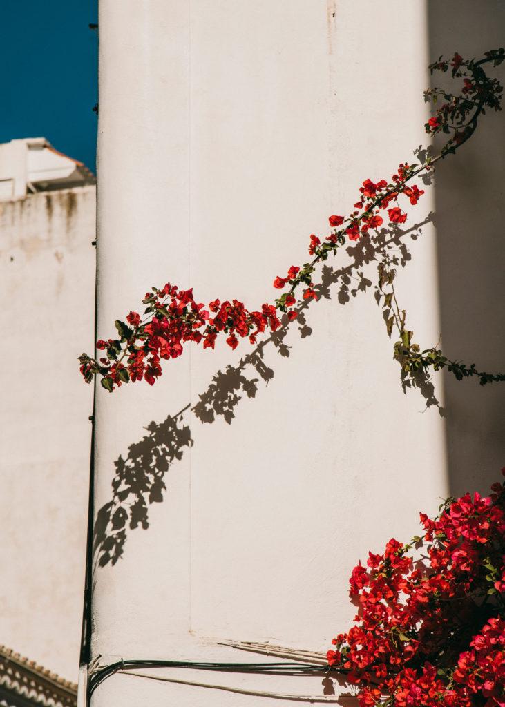 #mediterranean #spain #ibiza #red #loewe #mood #daltvila #street