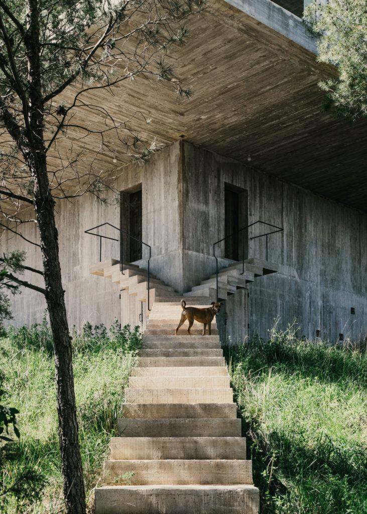 #architecture #spain #openhouse #solo #pezovonellrichshausen #stairs #animals