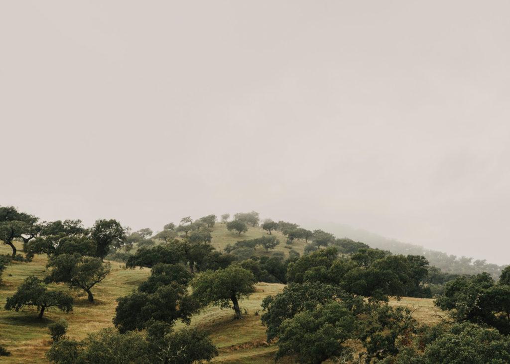 #landscapes #spain #extremadura #sousa #labourdette #travel #foiegras #dehesa #d2
