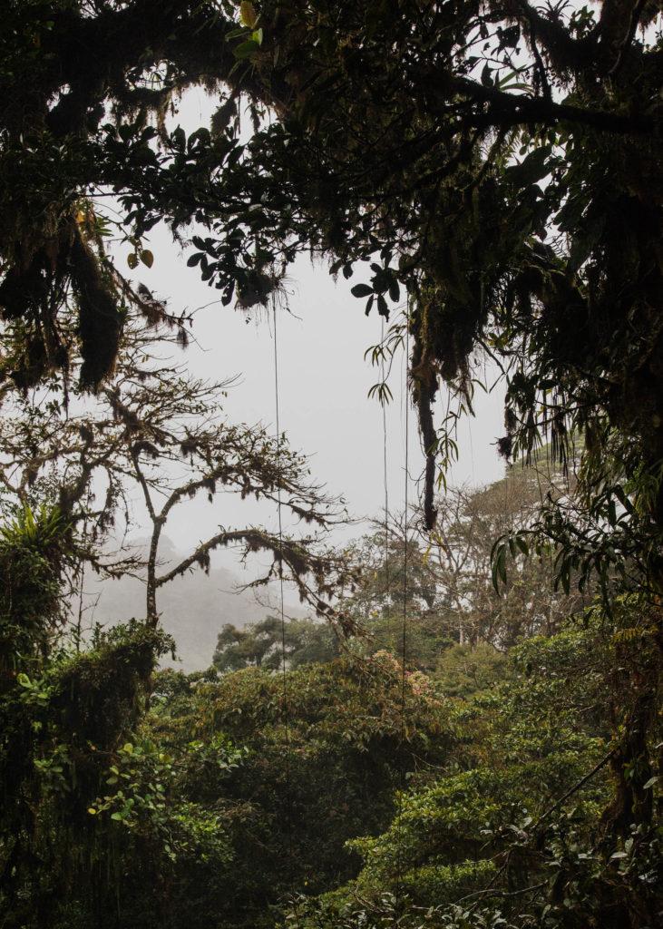 #personal #costarica #1617 #monteverde #green #vegetal