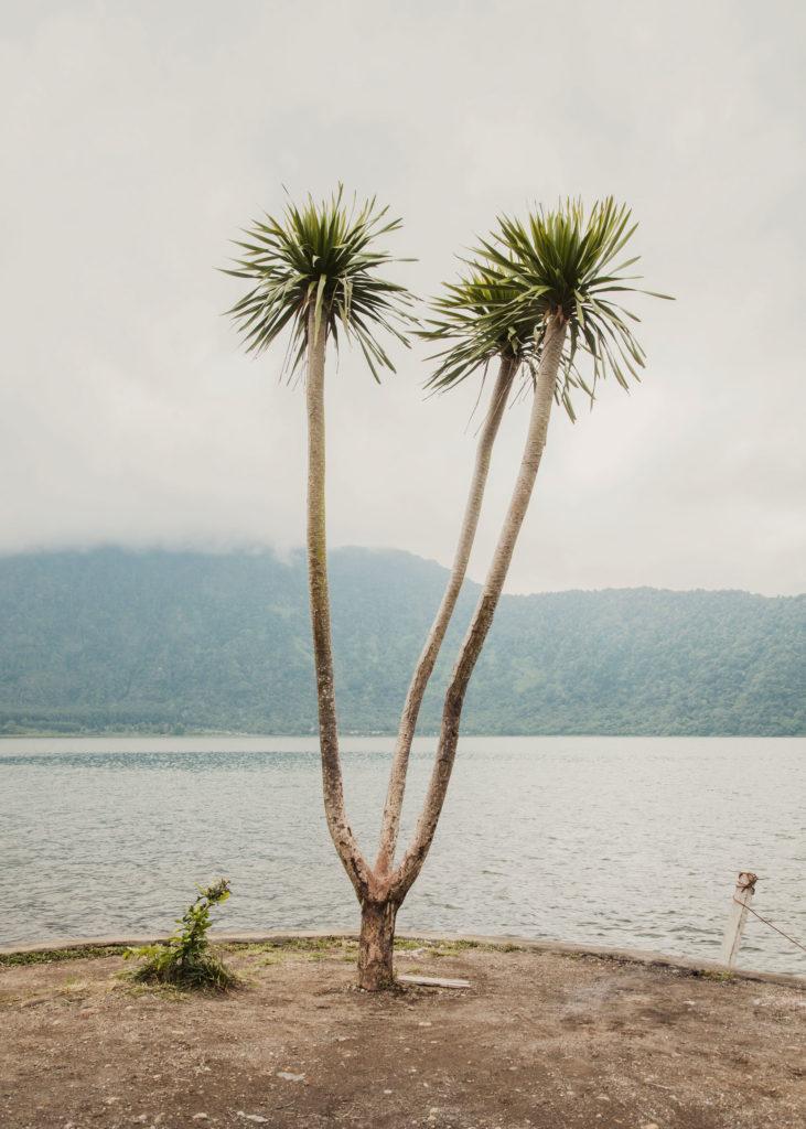 #indonesia #bali #plants #1415