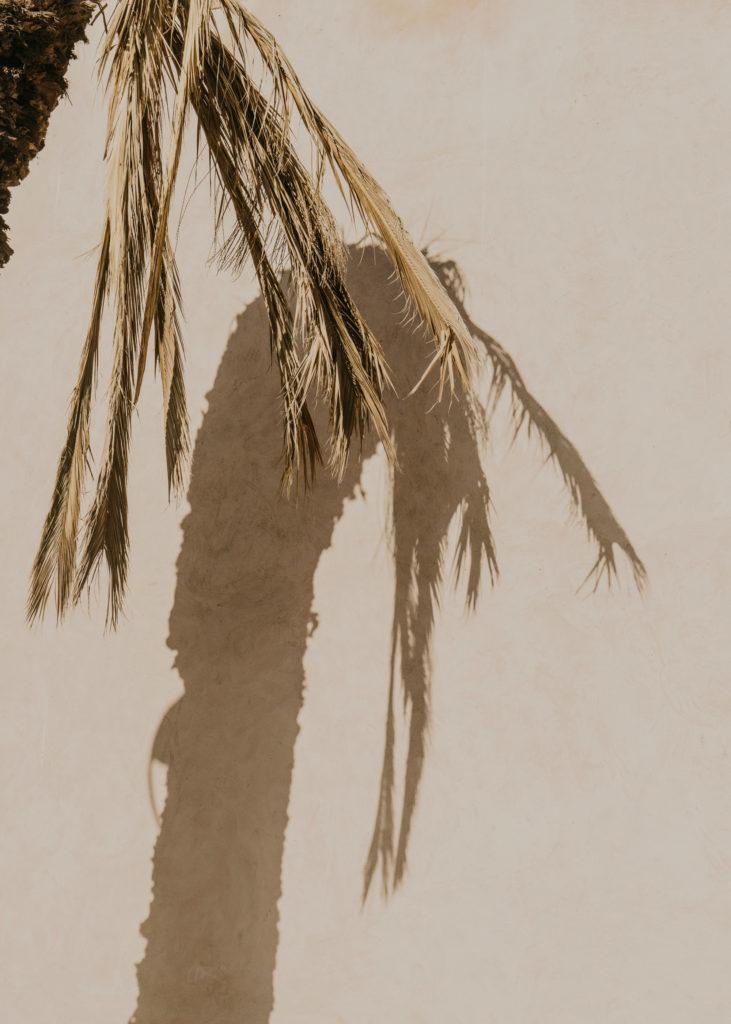 #personal #morocco #essaouira #plants #1415