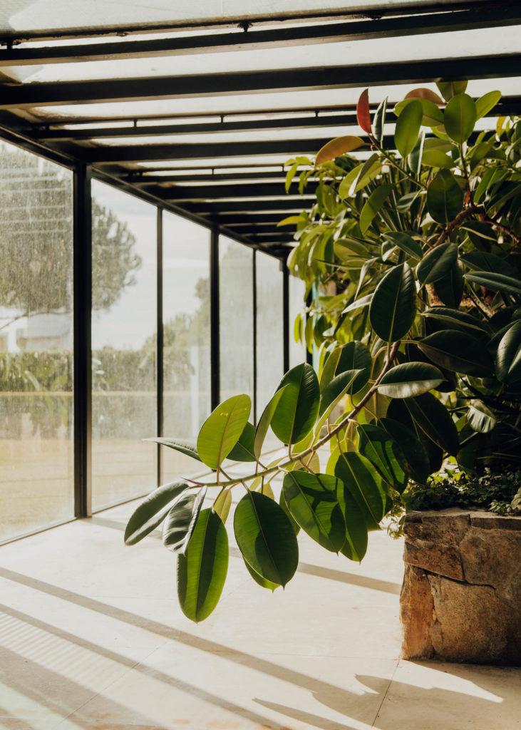 #laricarda #bonet #barcelona #interiors #midcenturymodern #plants #green #vegetal