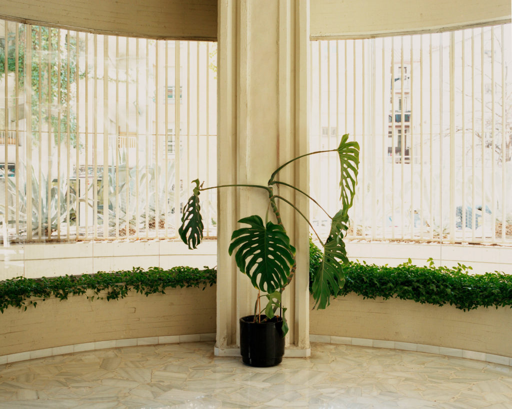 #monocle #fernandohigueras #madrid #interiors #monstera