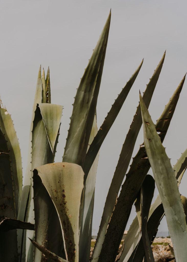 #natura #naturass17 #formentera #mood #med #cactus