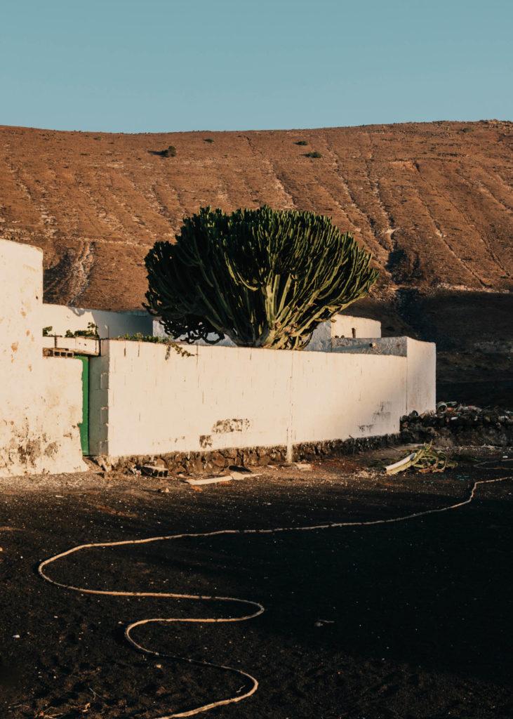 #1617 #lanzarote #houses #cactus