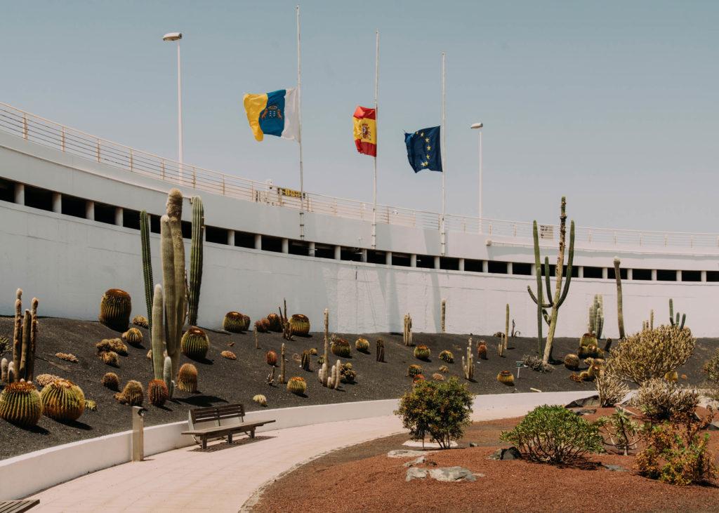 #1617 #lanzarote #cactus #vegetal #airport