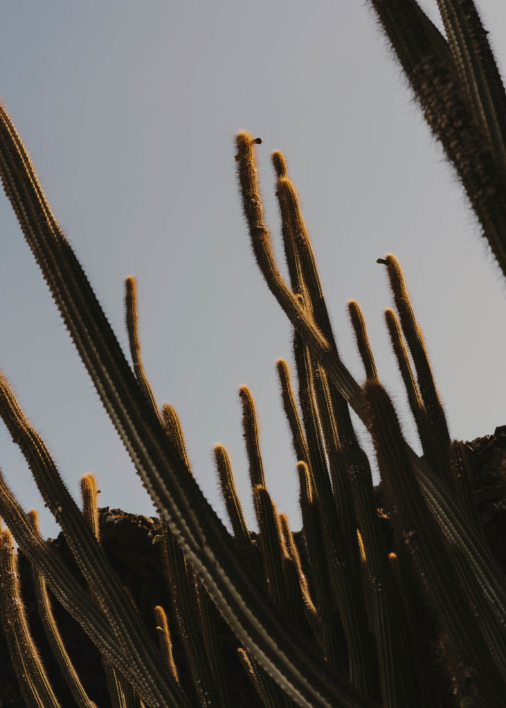#1617 #lanzarote #cactus #cesarmanrique #vegetal #plants #jameosdelagua