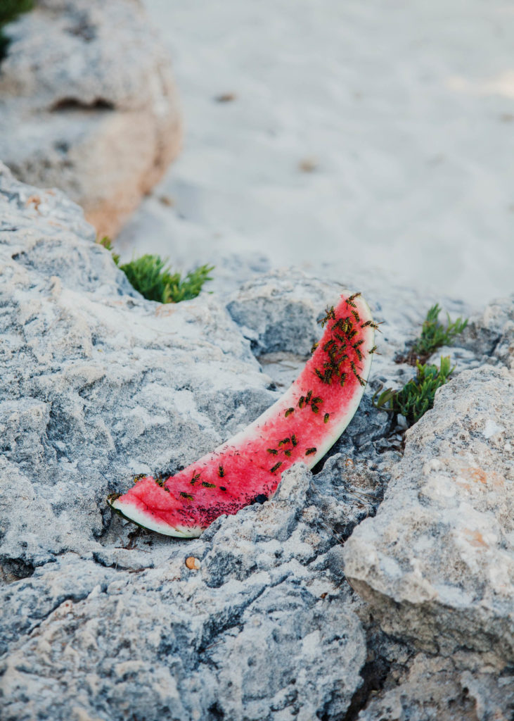 #1617 #watermelon #fruits #pink #beach