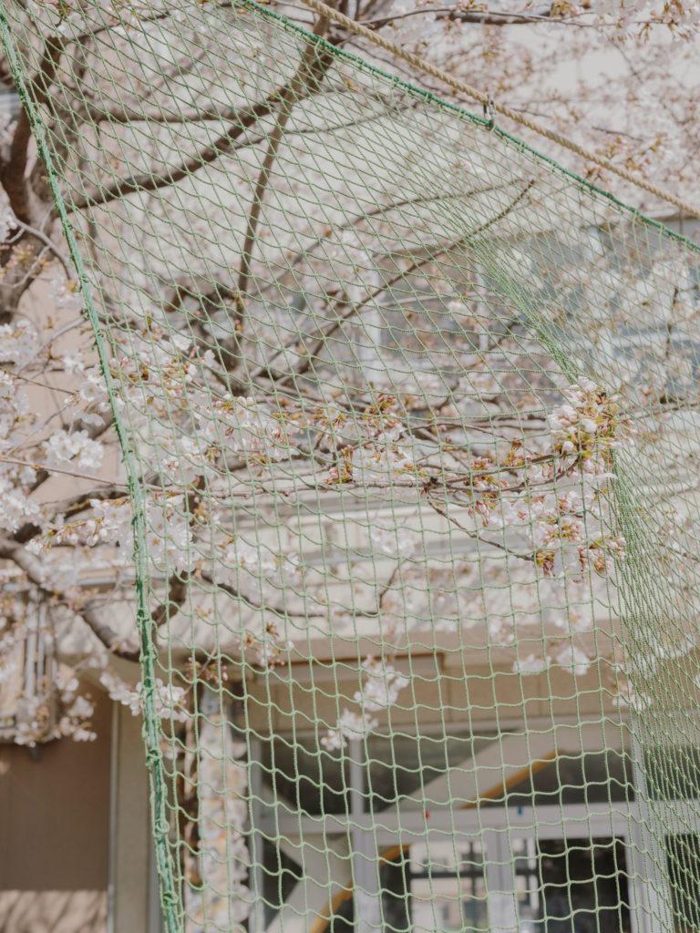 #japan #tokyo #personal #2018 #baseball #cherryblossom