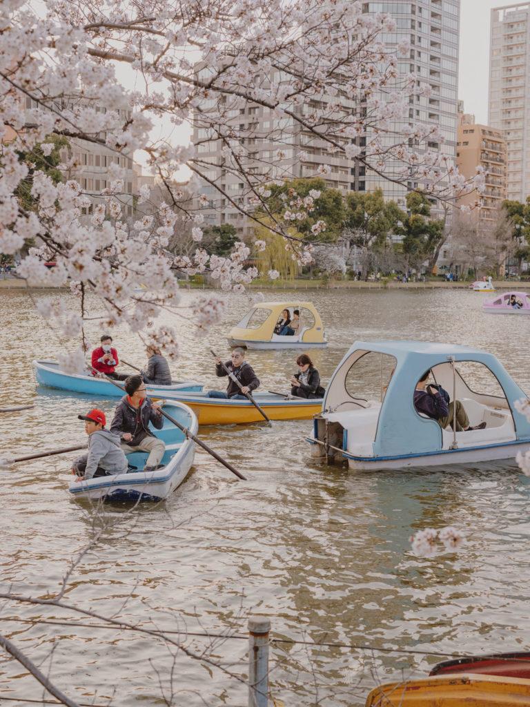 #japan #tokyo #personal #2018 #cherryblossom #park #blue