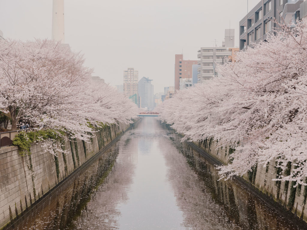 #japan #tokyo #personal #2018 #cherryblossom