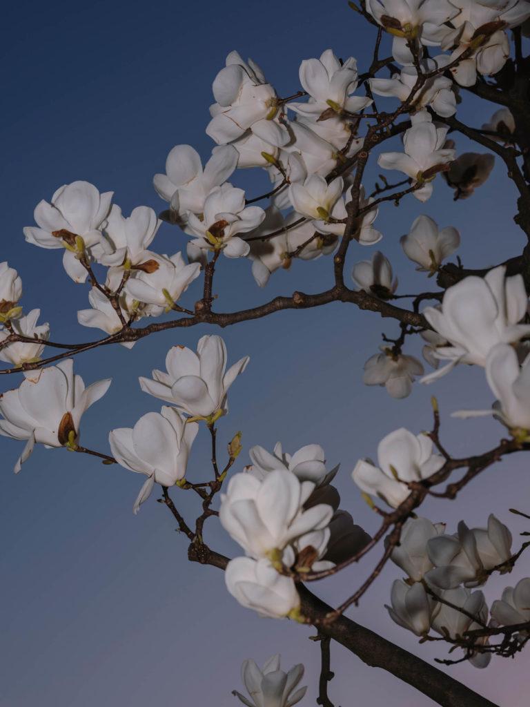 #japan #kanazawa #personal #flowers #blue #2018