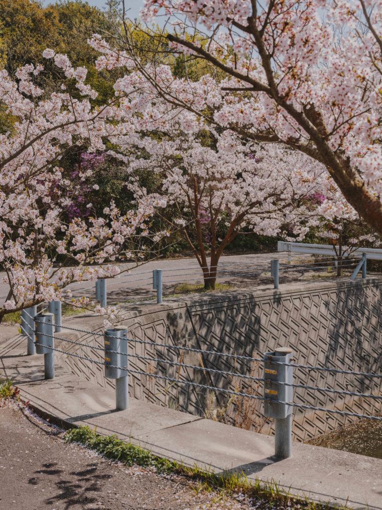 #japan #naoshima #island #cherryblossom #pink #2018