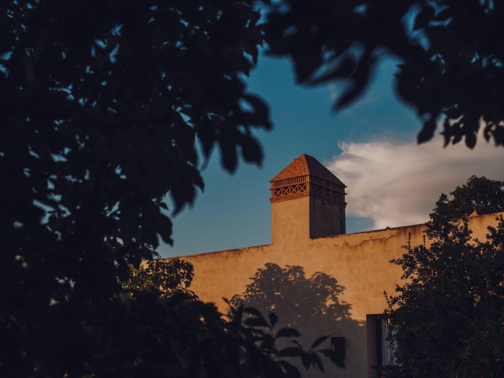 #caruncho #gardener #workspace #studio #editorial #madrid #openhousemagazine #sunset