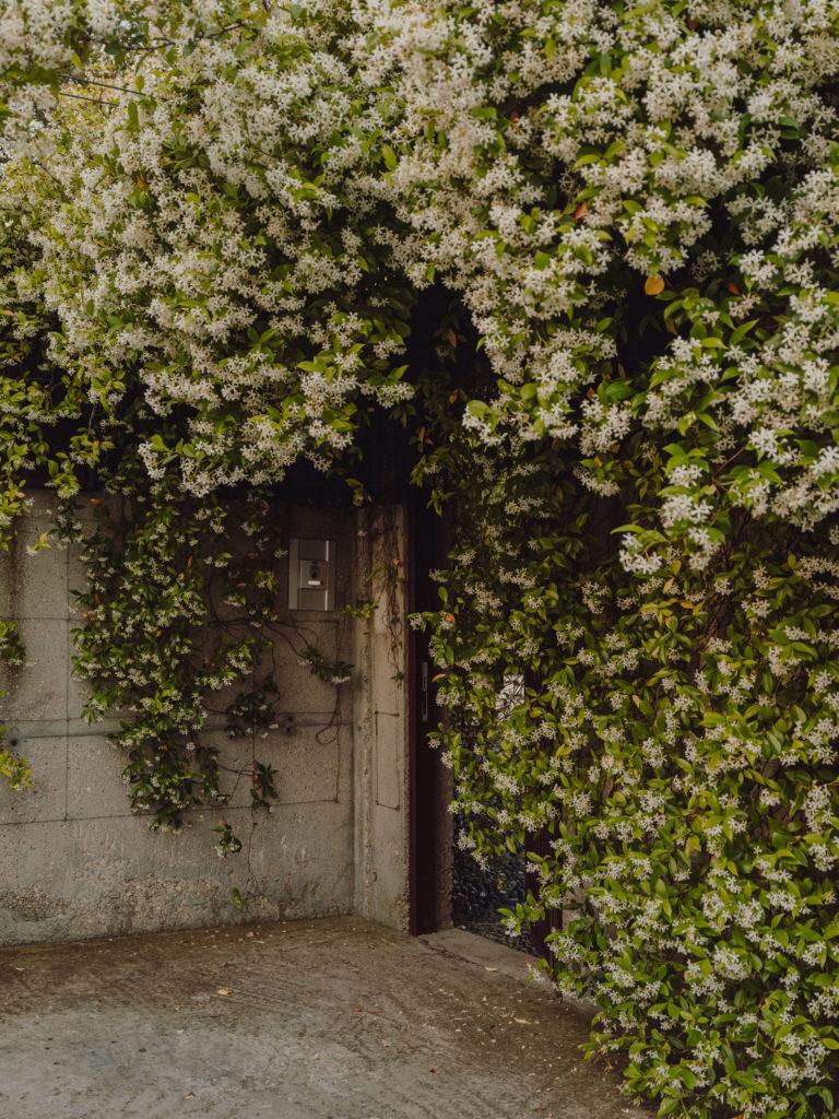 #caruncho #gardener #workspace #studio #editorial #madrid #openhousemagazine