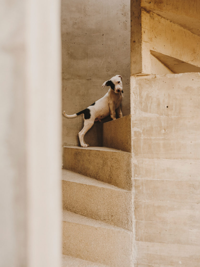 #airbnb #uniqueplaces #puertoescondido #mexico #oaxaca #dogs #stairs