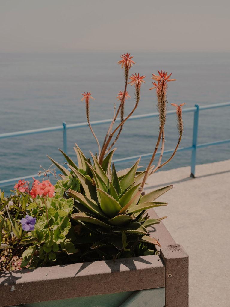 #2019 #puglia #italy #andrano #flowers #personal