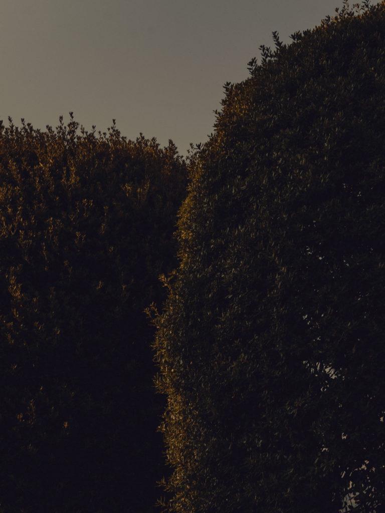 #2018 #lakecomo #italy #boat #personal #garden #vegetal