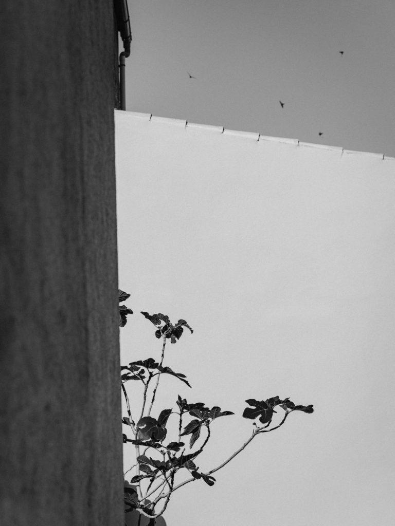 #pottershouse #lucianogiubbilei #mallorca #sonservera #openhousemagazine #details #fig